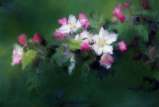 2 test blossoms D