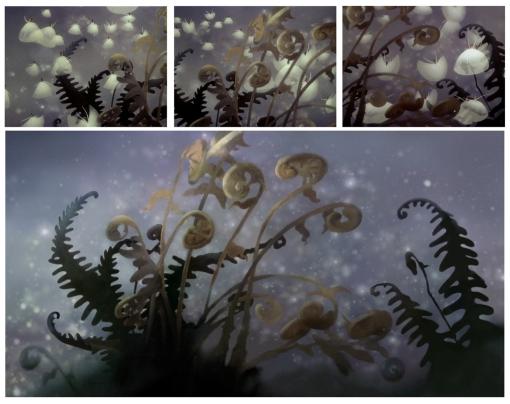 milkweed ballerinas recr